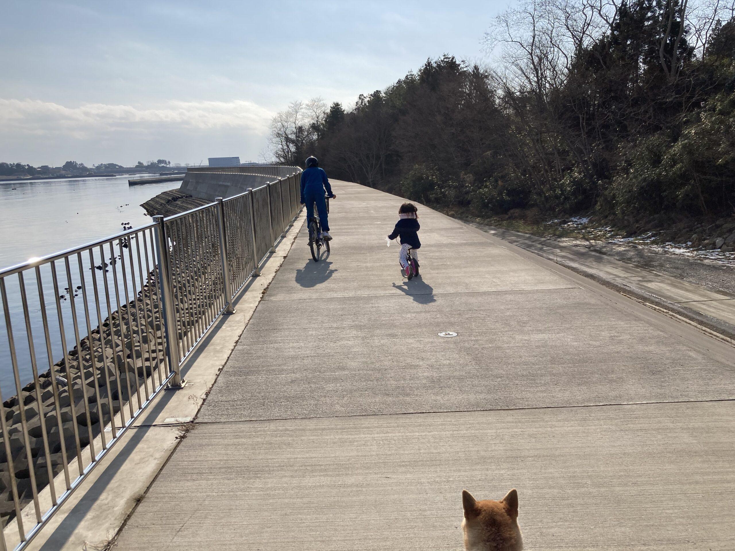 防潮堤散歩コース