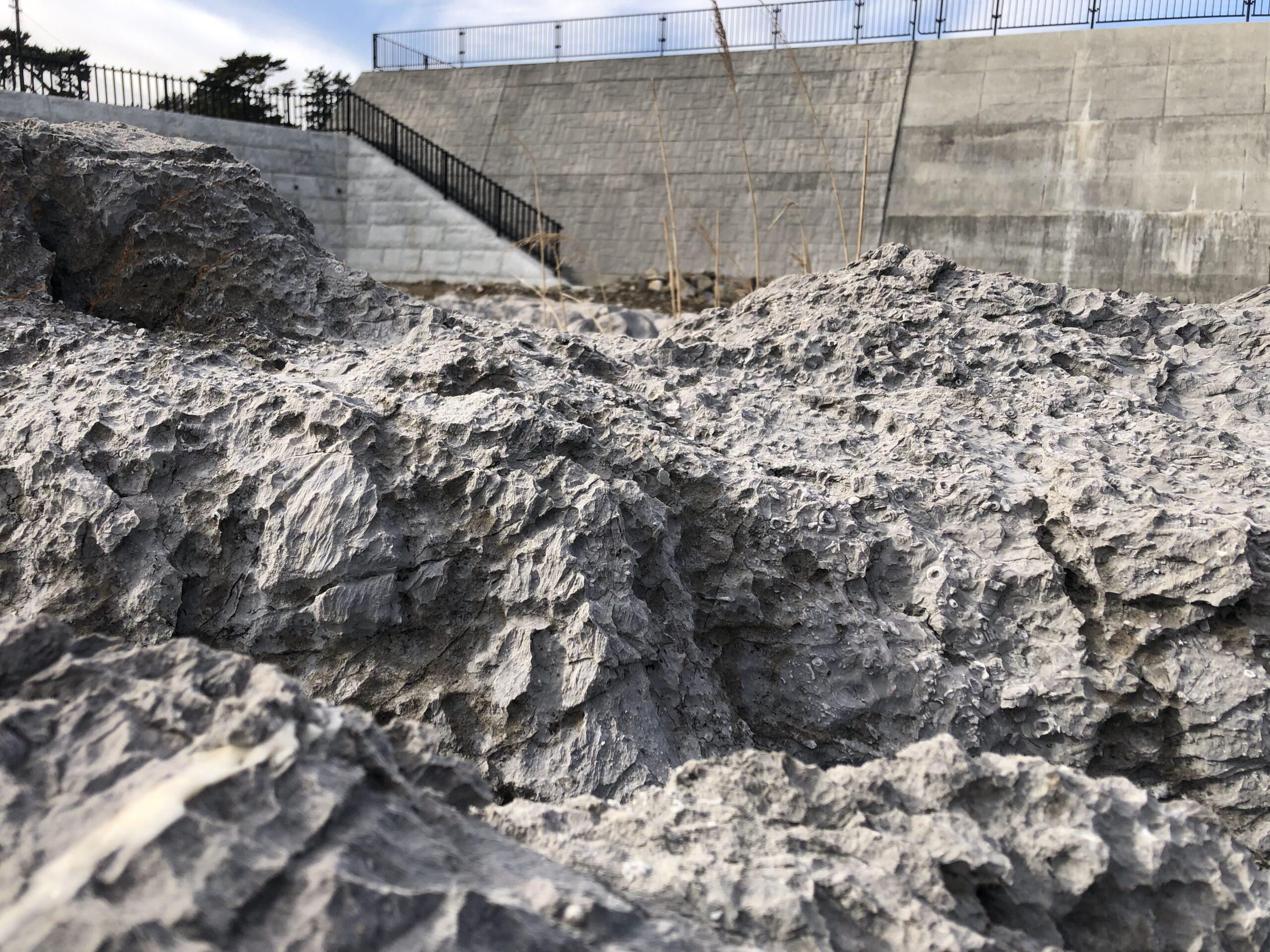 ペルム紀化石産地