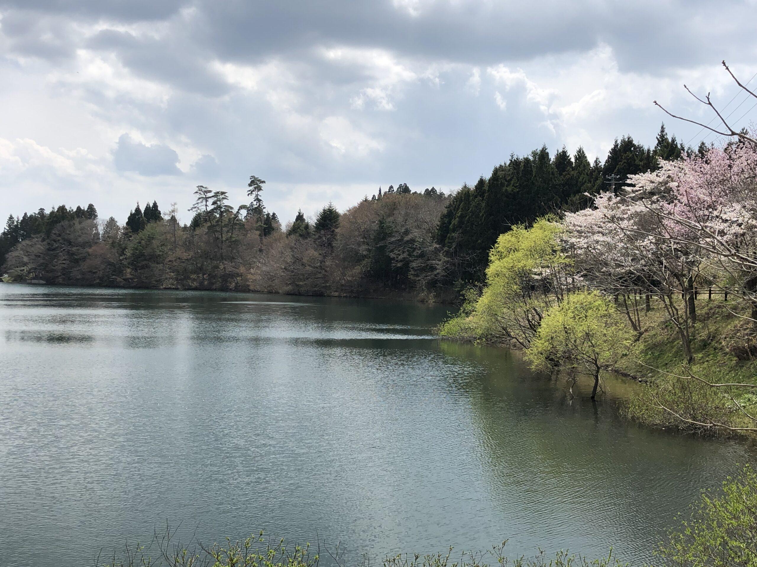 菖蒲沢の桜